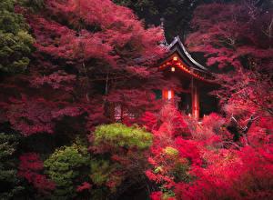 壁纸、、日本、京都市、公園、パゴダ、木、自然