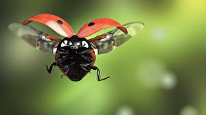 Image Ladybugs Closeup Flight animal
