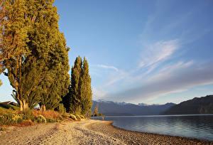 Pictures New Zealand Lake Autumn Trees Lake Wanaka Nature