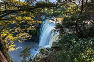 Hintergrundbilder Neuseeland Wasserfall Felsen Ast Rainbow Falls Kerikeri Natur