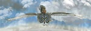 Fotos Eulen Vögel Hörnchen Flug Koffer Tiere