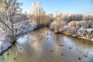 Hintergrundbilder Russland Sankt Petersburg Park Winter Fluss Ente Bäume Park Esenina Natur