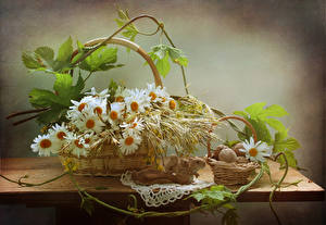 Fotos Stillleben Kamillen Schalenobst Hörnchen Tisch Weidenkorb Blumen