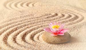 Hintergrundbilder Steine Lotosblume Sand