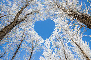 Wallpaper Winter Trees Heart Snow Branches Nature