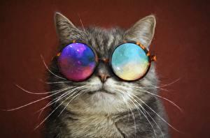 Fotos Hauskatze Gezeichnet Brille Schnurrhaare Vibrisse