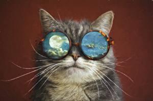 Fotos Hauskatze Gezeichnet Schnurrhaare Vibrisse Brille Mond