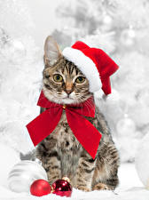 Wallpapers Christmas Cat Winter hat Balls Glance Bowknot Animals