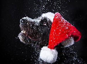Picture Christmas Dogs Black background Snout Snow Winter hat Animals