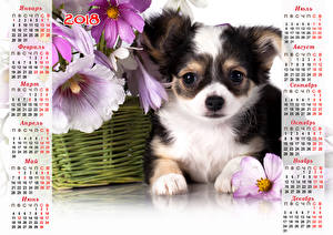 Image New year Dogs Calendar 2018 Puppy Chihuahua