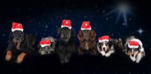 Bilder Neujahr Hund Nacht Mütze Blick Spaniel