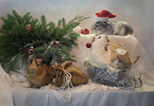 Hintergrundbilder Neujahr Hausmeerschweinchen Ast Schlitten Geschenke Mütze Tiere