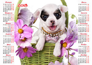 Wallpaper Dogs Cosmos plant Jewelry Calendar 2018 Chihuahua Russian Animals