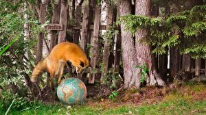 Wallpaper Foxes Internet Globe Jump Firefox Animals
