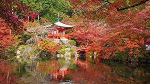 壁纸、、日本、京都市、公園、池、秋、パゴダ、低木、自然
