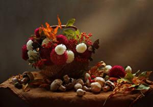 Hintergrundbilder Stillleben Astern Herbst Beere Pilze Weidenkorb Blatt Blüte
