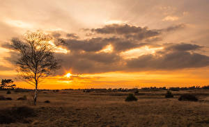 Fotos Sonnenaufgänge und Sonnenuntergänge Himmel Acker Wolke Bäume Natur