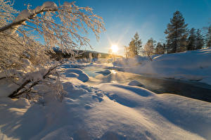 Image Winter Sunrises and sunsets Snow Branches Nature