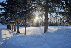 Papel de Parede Desktop Invierno árvores Neve Raios de luz Naturaleza