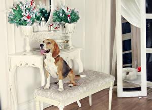 Photo Christmas Dogs Beagle animal