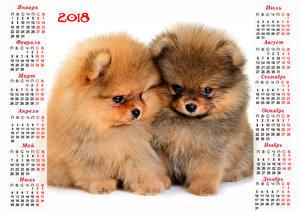 Picture New year Dog Calendar 2018 2 Puppy Spitz Russian Animals