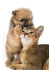 Images Dogs Cats White background 2 Puppies animal