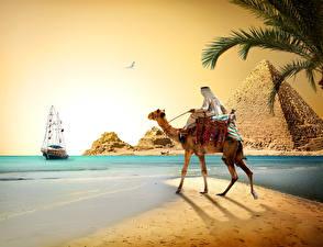 Bilder Ägypten Wüste Altweltkamele Küste Schiffe Segeln Pyramide bauwerk Cairo Natur