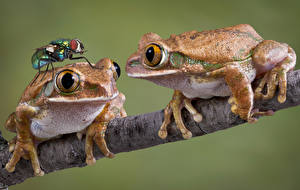Wallpapers Frogs Flies Colored background 2 Branches animal