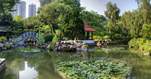 Sfondi desktop Hong Kong Cina Giardini Stagno Ponti Pietre Nan Lian Garden Natura