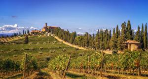 Bilder Haus Felder Italien Toskana Rebberg Strauch Bäume Castello Banfi