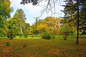 Tapety na pulpit Węgry Jesienne Park Drzewa Liście Krzewy Szeged przyroda