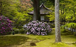 デスクトップの壁紙、、日本、京都市、公園、パゴダ、ツツジ、木の幹、低木、自然