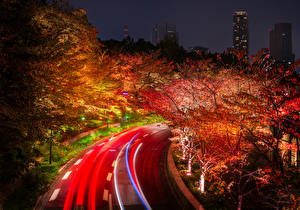 Pictures Japan Tokyo Roads Autumn Trees Night time Nature