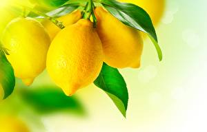 Bilder Zitrone Großansicht Blatt Lebensmittel