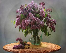Bilder Flieder Tisch Vase Ast Blumen