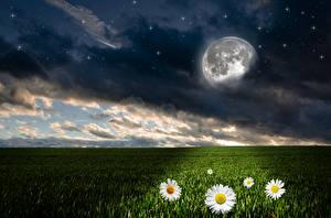 Bilder Landschaftsfotografie Acker Himmel Kamillen Stern Nacht Mond Wolke