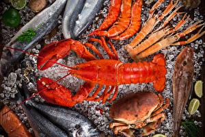 Hintergrundbilder Meeresfrüchte Flusskrebs Krabben Fische - Lebensmittel Hummerartige Lebensmittel