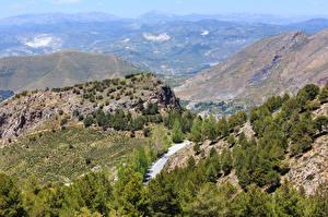 Photo Spain Mountain Parks Spruce Trees Sierra Nevada National Park Nature