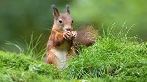 Bilder Eichhörnchen