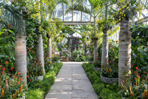 Hintergrundbilder Vereinigte Staaten Garten Chicago Stadt Palmengewächse Strauch Chicago Botanic Garden Natur