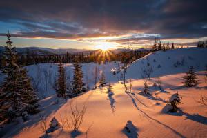 Papel de Parede Desktop Invierno Pôr do sol Neve Picea Raios de luz Naturaleza