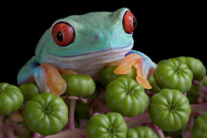 Fotos Frosche Tomate Nahaufnahme ein Tier
