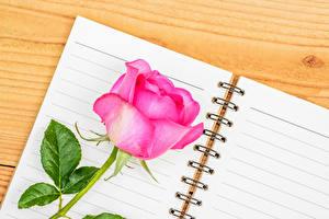 Hintergrundbilder Rosen Großansicht Bretter Rosa Farbe Notizblock Blumen