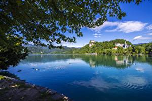 Bilder Slowenien See Ente Ast Lake Bled Natur
