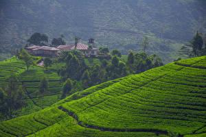 Bilder Sri Lanka Landschaftsfotografie Acker Haus Hügel Bäume Natur