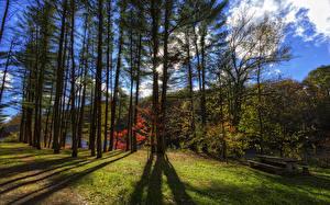Hintergrundbilder Vereinigte Staaten Park Bäume Bank (Möbel) Letchworth State Park Natur