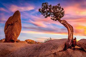 Hintergrundbilder Vereinigte Staaten Park Himmel Steine Kalifornien Bäume Joshua Tree National Park Natur