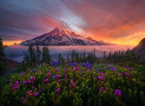 Hintergrundbilder Vereinigte Staaten Landschaftsfotografie Gebirge Sonnenaufgänge und Sonnenuntergänge Washington Fichten Mount Rainier Natur