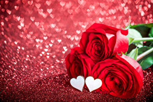 Photo Valentine's Day Roses Closeup Red Three 3 Heart flower