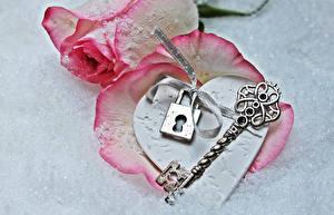 Fondos de escritorio Día de San Valentín Rosa Fondo gris Rosa color Llave Corazón Flores